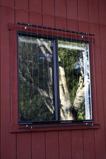 Bird Safety Window Treatment