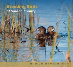Breeding Birds of Solano County
